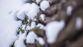 Drzewnej barkentyny śnieg Obrazy Royalty Free