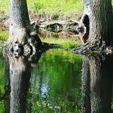 Drzewnej barkentyny odbicie Zdjęcia Royalty Free