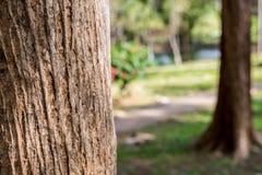 Drzewnej barkentyny skóra duży drzewny plenerowy park Selekcyjna ostrość Zdjęcia Royalty Free
