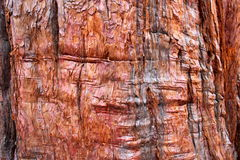 Drzewnej barkentyny tło Obraz Stock