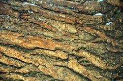 Drzewnej barkentyny tło fotografia royalty free