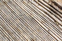 Drzewnej barkentyny tło Zdjęcie Stock