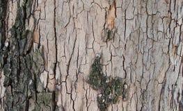 Drzewnej barkentyny tło Zdjęcia Stock