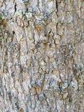 Drzewnej barkentyny tło Zdjęcia Royalty Free