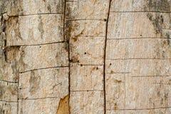 Drzewnej barkentyny tło Obraz Royalty Free