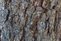 Drzewnej barkentyny tło Obrazy Royalty Free