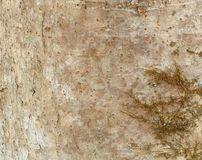 Drzewnej barkentyny tło Z liszajem Fotografia Royalty Free