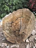 Drzewnej barkentyny tła zapas Zdjęcie Royalty Free
