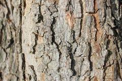 Drzewnej barkentyny tapeta i tekstura Obrazy Royalty Free