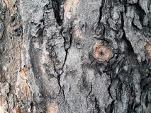 Drzewnej barkentyny tapeta i tekstura Zdjęcia Stock