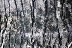 Drzewnej barkentyny tapeta i tekstura Obraz Stock