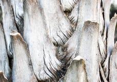 Drzewnej barkentyny tapeta i tekstura Zdjęcie Stock