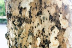 Drzewnej barkentyny tapeta i tekstura Obraz Royalty Free