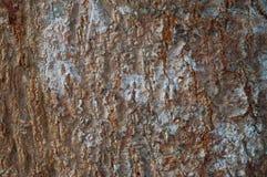 Drzewnej barkentyny tekstura Zdjęcia Stock