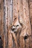 Drzewnej barkentyny tekstura Zdjęcia Royalty Free