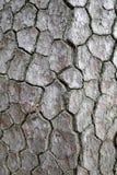 Drzewnej barkentyny tekstura szorstka Zdjęcie Royalty Free