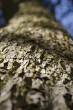 Drzewnej barkentyny tekstura z zielonym mech z cieniami i niebieskiego nieba spojrzeniem Zdjęcia Stock