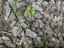 Drzewnej barkentyny tekstura z zielonymi roślinami tło obraz stock