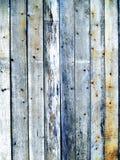 Drzewnej barkentyny tekstury korowaty drzewny bagażnik Obraz Royalty Free