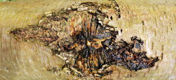 Drzewnej barkentyny tekstury tło Obrazy Stock