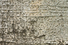 Drzewnej barkentyny tekstury tło Fotografia Stock