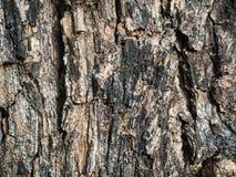Drzewnej barkentyny tekstury tła wzór Zdjęcie Royalty Free
