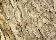 Drzewnej barkentyny tekstury wzór drewniana skórka obrazy stock