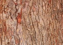 Drzewnej barkentyny tekstury wzór drewniana skórka dla tła obraz royalty free