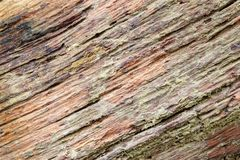 Drzewnej barkentyny texture/tło zdjęcia royalty free