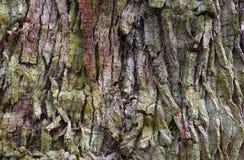 Drzewnej barkentyny wzór Zdjęcia Royalty Free