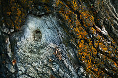 Drzewnej barkentyny zakończenie Obrazy Stock