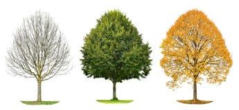 Drzewnej sylwetki wiosny lata odosobniona jesień Zdjęcia Stock