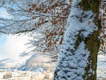 Drzewnej zimy śnieżny sezon z pejzażem miejskim Salzburg Austria obraz royalty free