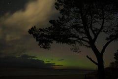 Drzewnej zorzy biegunowi światła dużej chochli gwiazdozbiór grają główna rolę zdjęcia royalty free