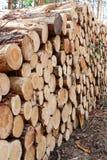 Drzewni bagażniki Zdjęcie Stock