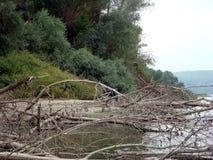 Drzewni bagażniki i gałązki wysuszony Zdjęcie Stock