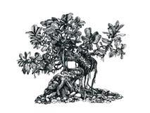 Drzewni bonsai, czarny i biały, rysunkowy pióro, Zdjęcie Stock