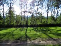 Drzewni cienie zdjęcia stock