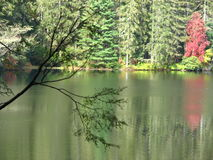 drzewni czerwoni odbicia Zdjęcia Royalty Free