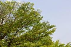 Drzewni drewniani tekstur tła Zdjęcie Royalty Free