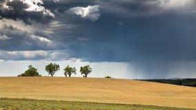 Drzewni drzewa w polu z zbliża się burzą Obraz Stock