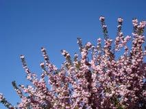 drzewni gałąź kwiaty Fotografia Royalty Free