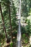 Drzewni hugger systemy zdjęcia royalty free