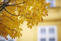 drzewni jesień liść Zdjęcie Royalty Free