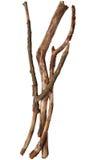 Drzewni kije fotografia royalty free
