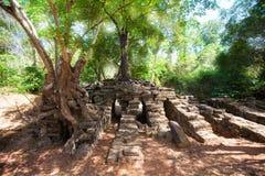 Drzewni korzenie historyczna Khmer świątynia wewnątrz i, Obrazy Stock
