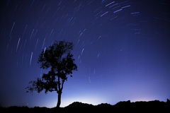 Drzewni ślada Zdjęcie Stock