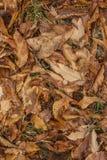 Drzewni liście Obraz Royalty Free