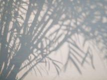 Drzewni liście ocieniają na ściennym tle, Abstrakcjonistyczny tło Cemen Zdjęcia Stock