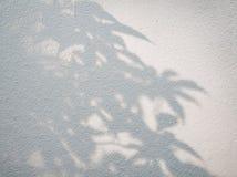 Drzewni liście ocieniają na ściennym tle, Abstrakcjonistyczny tło Cemen Zdjęcie Royalty Free